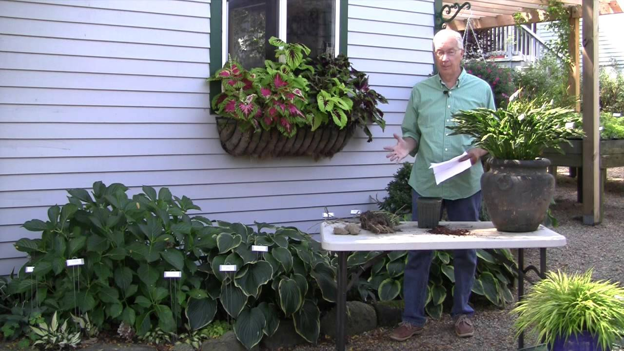 How Late In The Fall Can I Plant Hostas Youtube