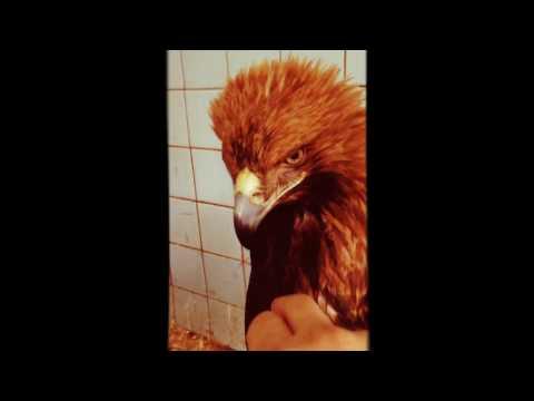 знакомства орел