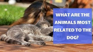 What Are The Animals Most Related To The Dog?