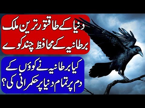 Ravens of the Tower of London  Protectors of England.