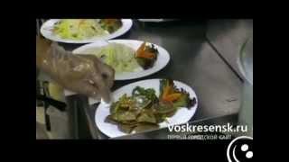 Кухня китайского ресторана Yappa(, 2013-02-09T19:46:11.000Z)