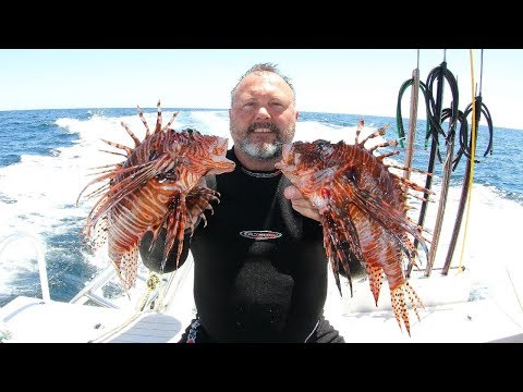 2019April27 LionFish Hunting Off Pensacola With Team Parkerized