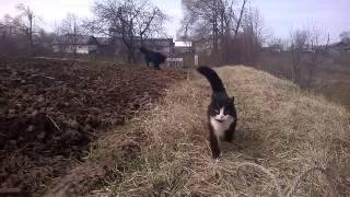 Кошка защищает хозяина.Funny cat