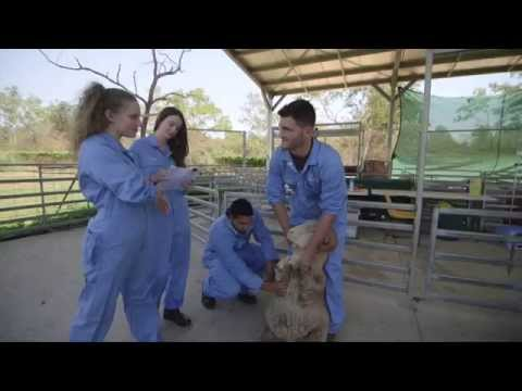 School of Veterinary & Biomedical Sciences