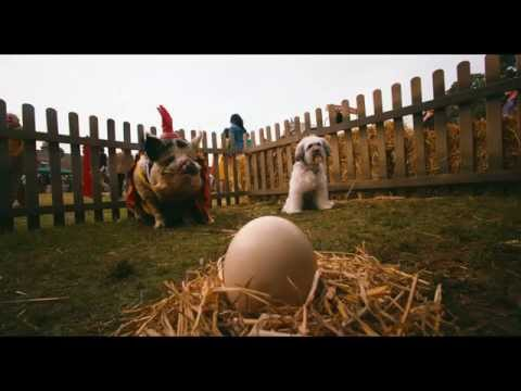 Pudsey The Dog: The Movie  Latest  Vertigo Films HD