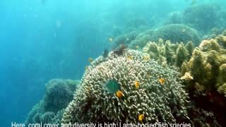 Reef Fish Habitats