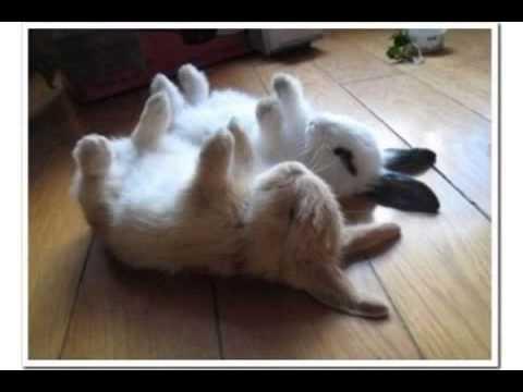 Hop Like A Bunny