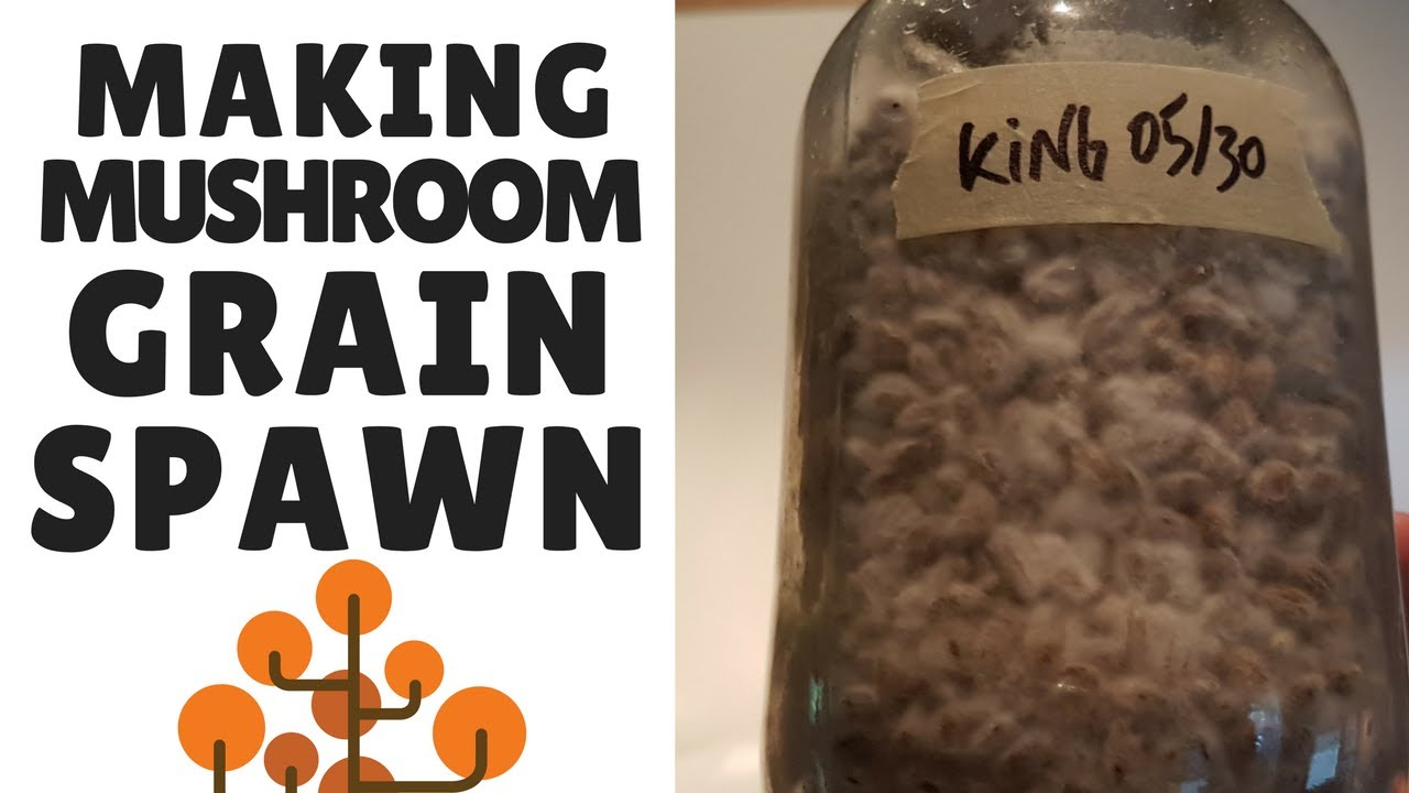 How To Make Mushroom Grain Spawn: Preparing the Grain