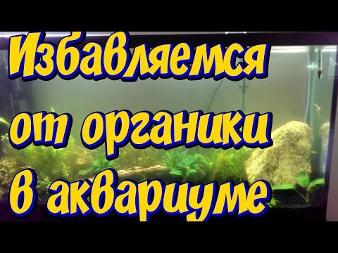 Как избавиться от мутной воды  и органики в аквариуме! Нашел замену гиацинту!