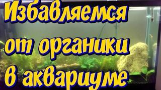 как избавиться от мутной воды и органики в аквариуме нашел замену гиацинту Youtube
