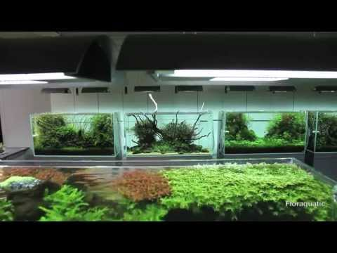 Escarpment nature aquarium by james findley step by step for Ada fish tank