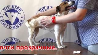 ДЖЕК РАССЕЛ ВИП