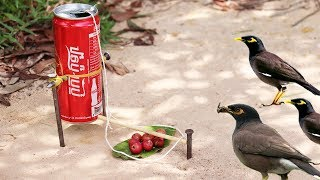 Easy Bird Trap Technology - Build Bird Trap Technology Make from Energy Can That work 100%