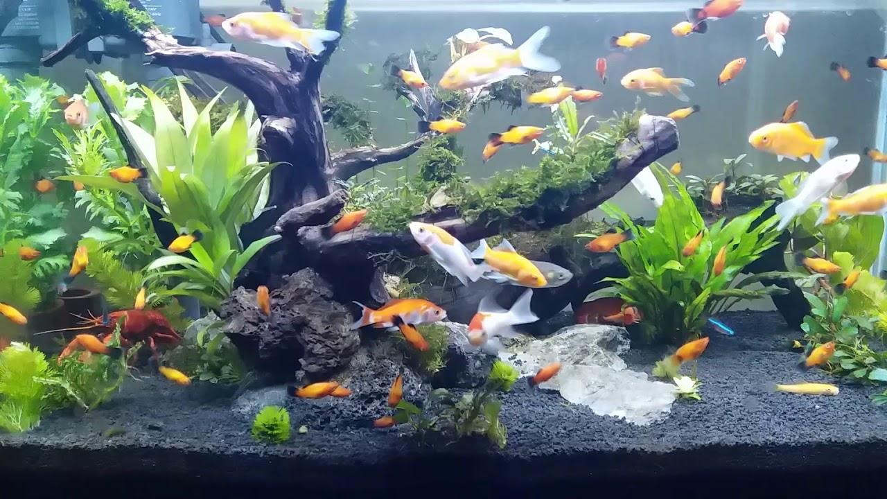 Konsep 29+ Ikan Hias Aquarium