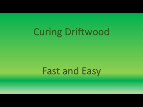Cure Terrarium Wood Fast and Easily