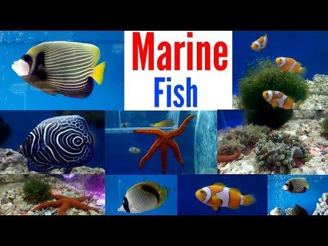 Marine Fish Saltwater Fish Aquarium Shop Mumbai
