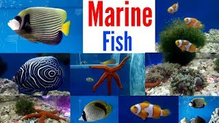 Marine Fish Saltwater Fish Aquarium Shop Mumbai