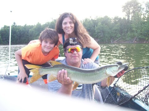 early august musky   chippewa flowage