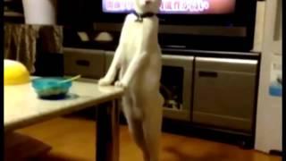 Хаха! Смейся до слёз! Приколы  про котов!😸