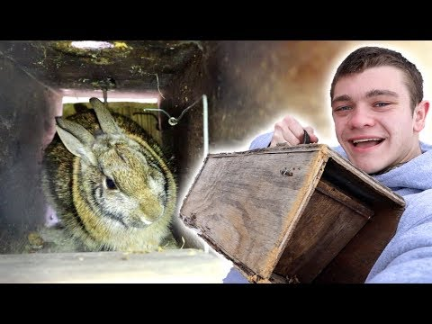 RABBIT TRAPPING *Homemade Traps*