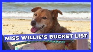 A Dying, Formerly Chained Dog's Bucket List