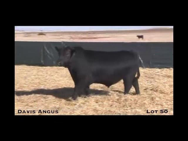 Davis Angus Lot 50