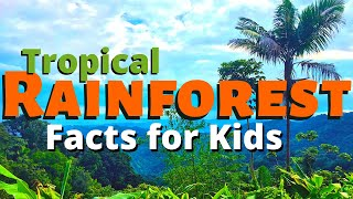 Rainforest Facts for Kids | All About the Amazon & Other Tropical Rainforests