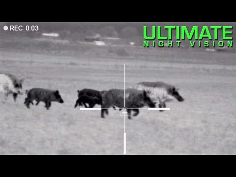125 Hogs Down with the Pulsar Trail XQ50 & XP50 | Hunting wi