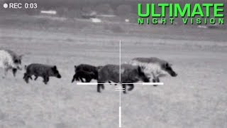 125 Hogs Down with the Pulsar Trail XQ50 & XP50 | Hunting with Thermal