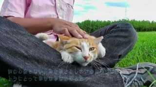 河原で一番綺麗で人懐こかった猫「トラ」が、2013年2月から姿を見せない...