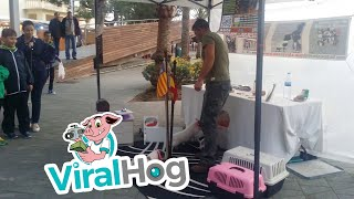 Talented Animals Show Off Tricks || ViralHog