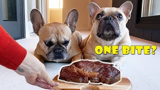 Can They Resist? Leaving My French Bulldogs Alone With A HUGE Steak