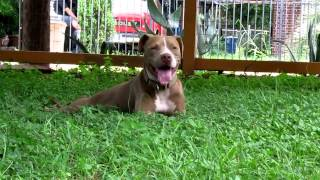 Adopt Alabama @ Austin Pets Alive!