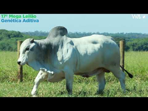 LOTE 31 - REMP 496 - 17º Mega Leilão Genética Aditiva 2020