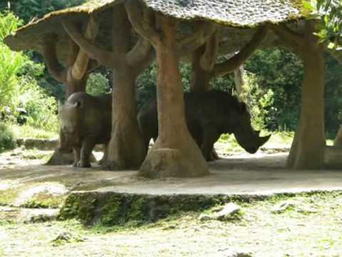 Taman Safari Bogor, Indonesia.wmv
