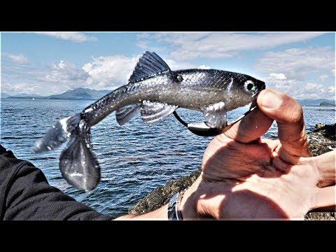 Fishing Alaska's Shore ALONE With New Swimbait