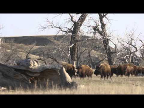 Buffalo Jerky and the Grasslands