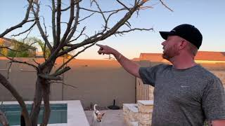 Grow a Lush Garden in Arizona Desert
