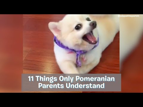Things Only Pomeranian Owners Understand