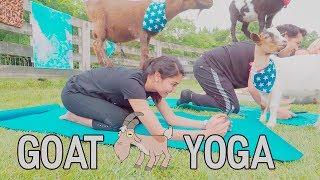 Goat Yoga in Nashville!