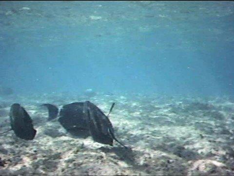 Snorkeling Ke'e Beach - Kauai'i - Hawaii