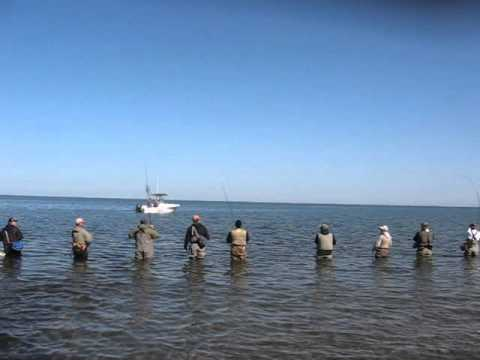 Erie pennsylvania steelhead fishing trout run october 7 for Erie pa steelhead fishing report
