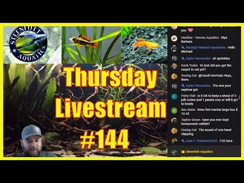 Viewers Drive the Show! Thursday Night Live Stream Episode 144