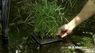 May Gardening Tips - Ornamental Pond Plants