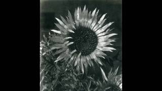 Humble Daisy by Andy Partridge