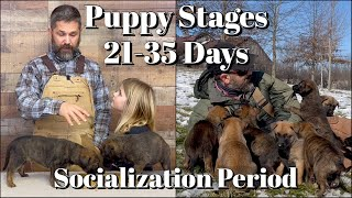 Puppy Developmental Stages: Episode 3 | Early Socialization Period (2149 Days)