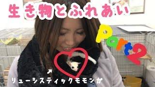 こんばんわ☆ 冨士木耶奈(ふじきかな)です! 前回の動画の続きで、 今回...