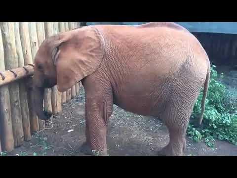 Baby Elephant Bedtime Routine