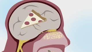 A Tasting of Culinary Science—Taste
