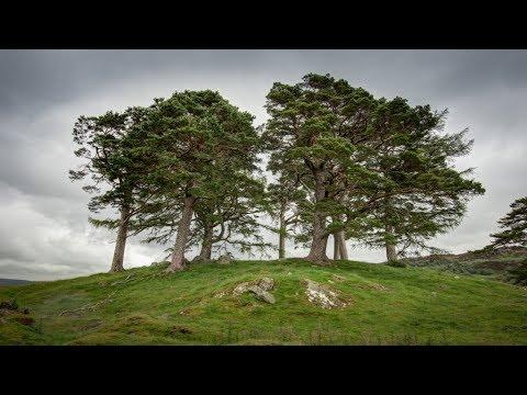 Walk with us up Craigh na Dun